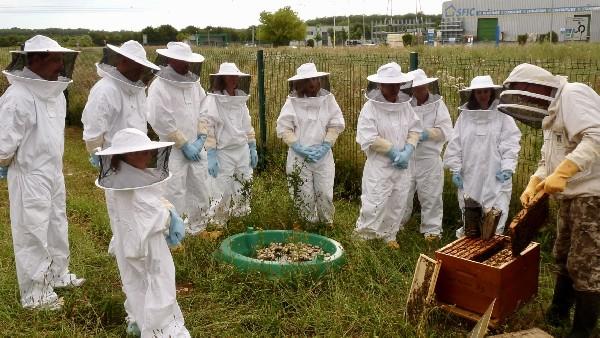 """Atelier """"visite de ruches"""" 2018 au Subdray ..."""