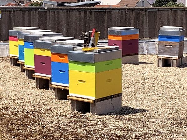 Les Ruches du rucher de la Mairie de Montreuil de l'Asso Les Ruchers de Montreuil avec leurs hausses colorées qui se remplissent du miel 2021 de Montreuil et environs en plein juin. Colorées et attrayantes les ruches sont visibles du ciel et constamment photographiées à partir de l'espace.
